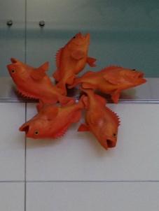Fish in Miami
