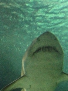 shark up close