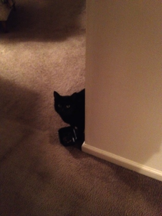 black cat peeking timidly around a corner