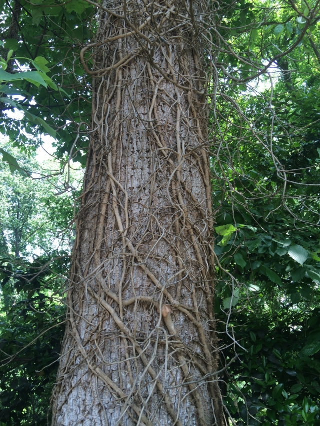 Tree trunk with branches wrapping around