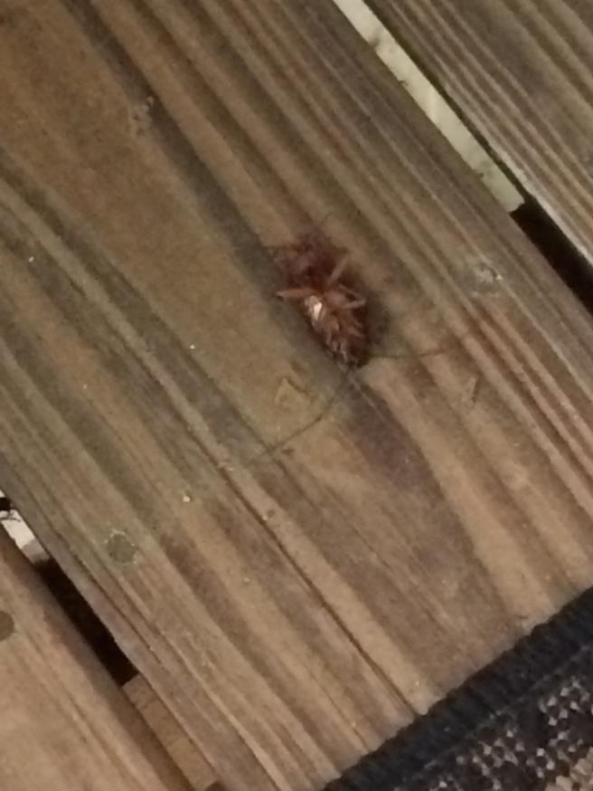 Dead roach