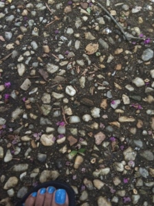 rock path with dead flowers