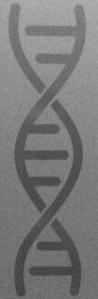 DNA strand sketch