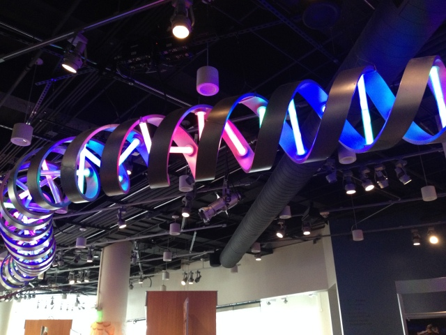 Strand of DNA at the museum of natural sciences