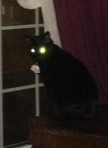 cat eyes in photo flash