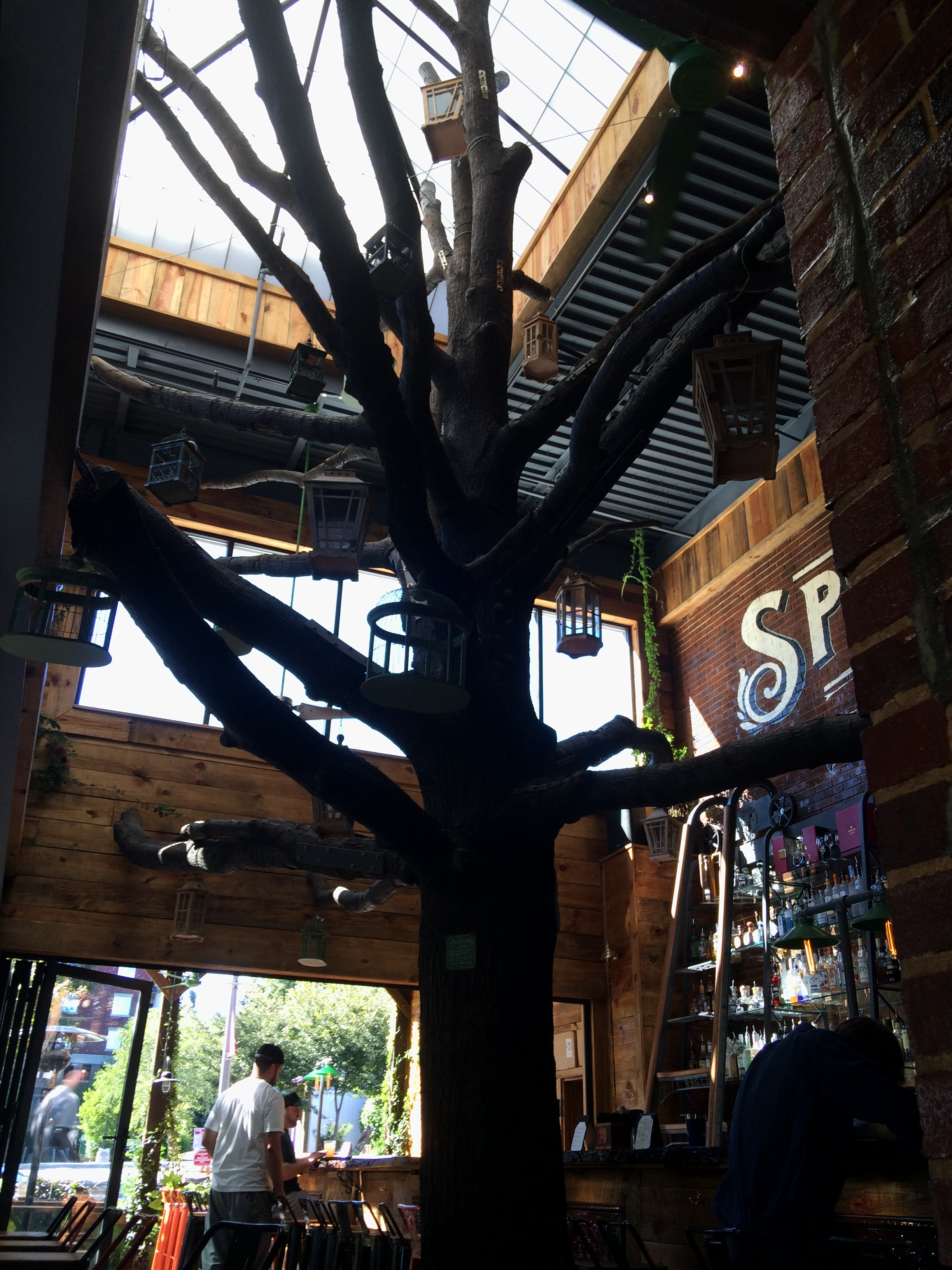 oak tree in raleigh beer garden - Raleigh Beer Garden