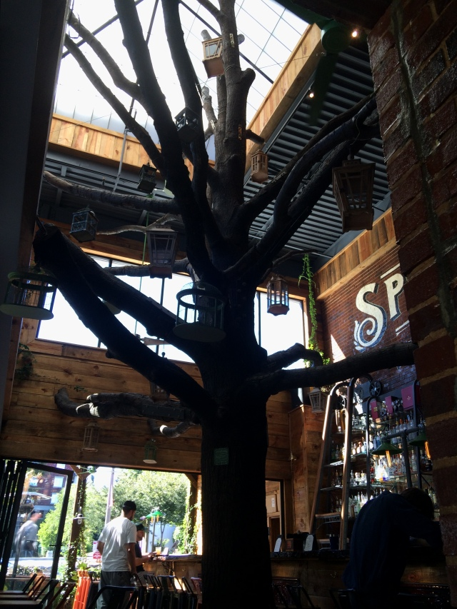Oak tree in Raleigh Beer Garden