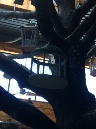bird feeder and cage in oak tree