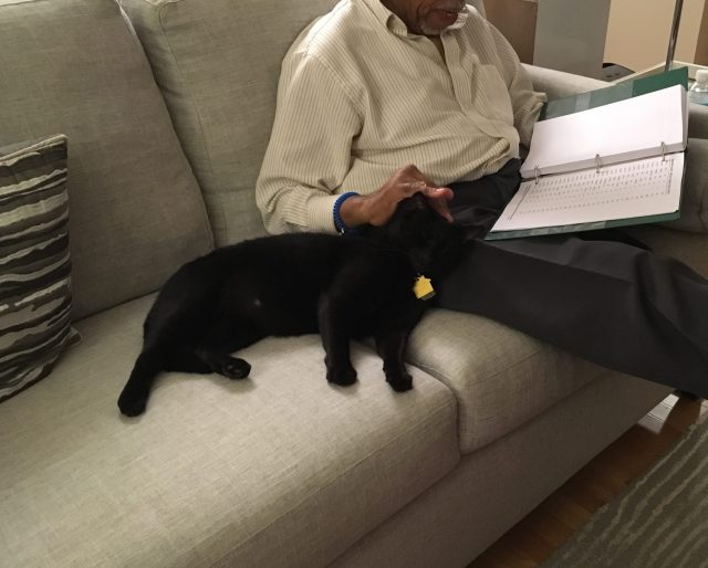 black cat sitting with man reading
