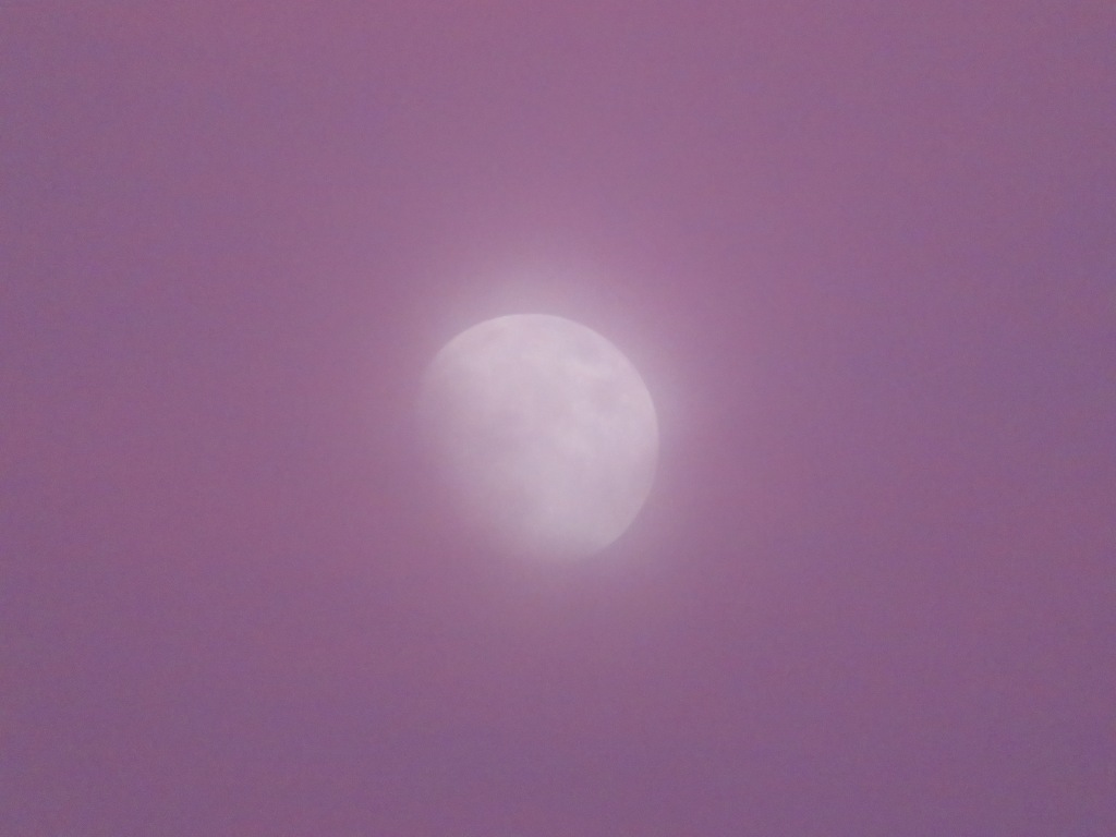 the moon at sunset in pink sky