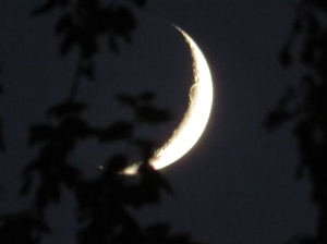 crescent moon through the trees